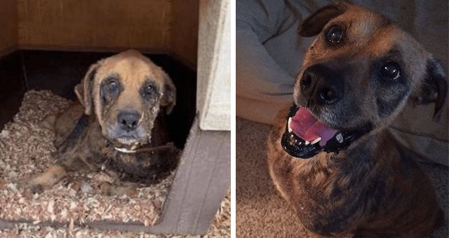 story about a dog who was given 6 months to live getting adopted and getting healthier thumbnail includes two pictures including a sick dog and another of a happy dog