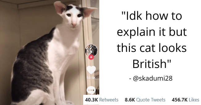 this week's collection of the best animal tweets thumbnail includes a picture of a funny cat 'Vertebrate - Sarah @skadumi28 Idk how to explain it but this cat looks British IVE Following For You 50.5K 2173 @hobbikats Happy Teddy Tuesday! Tedder's favorite 3001 7:51 AM Dec 9, 2020 - Twitter for iPhone 40.3K Retweets 8.6K Quote Tweets 456.7K Likes'