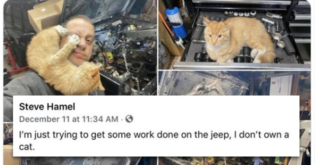 "weeks best and cutest wholesome animal memes - thumbnail includes man at car shop with cat all over the place ""I'm just trying to get some work done on the jeep, I don't own a cat."""