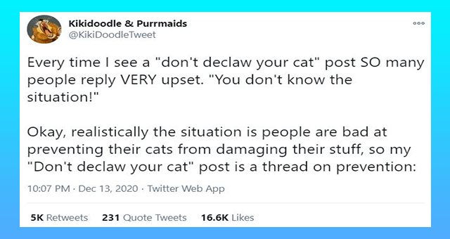 "viral twitter thread about alternatives to declawing your cats thumbnail includes one tweet 'Text - Kikidoodle & Purrmaids 000 @KikiDoodleTweet Every time I see a ""don't declaw your cat"" post SO many people reply VERY upset. ""You don't know the situation!"" Okay, realistically the situation is people are bad at preventing their cats from damaging their stuff, so my ""Don't declaw your cat"" post is a thread on prevention: 10:07 PM Dec 13, 2020 · Twitter Web App 5K Retweets 231 Quote Tweets 16.6K L'"