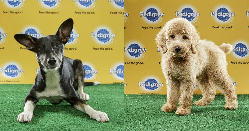 mvp dogs puppy super bowl Puppy Bowl cute - 1318661
