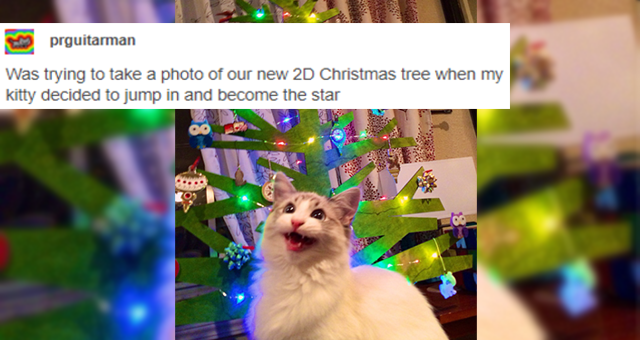 Christmas themed tumblr posts about animals thumbnail includes one picture of a cat screaming in front of a 2D Christmas tree 'Carnivore - prguitarman Was trying to take a photo of our new 2D Christmas tree when my kitty decided to jump in and become the star Source: prguitarman 222,463 notes ...'