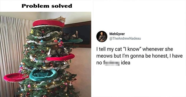 "adorable and hilarious animal pics and memes - thumbnail includes two animal memes - thumbnail of cat beds on christmas tree ""problem solved"" and tweet ""I tell my cat ""I know"" whenever she meows but I'm gonna be honest, I have no fucking idea"""