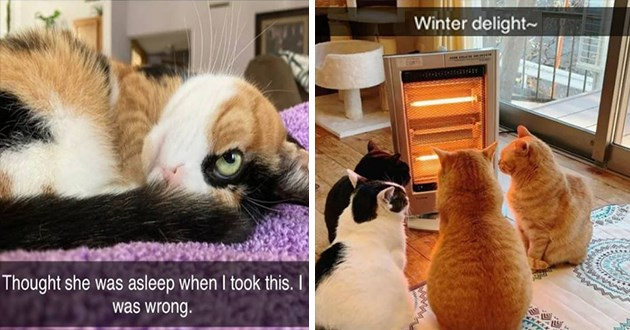 "fresh cat snapchats - thumbnail of two cat snap images - one of a cat with one eye open ""thought she was asleep when i took this, I was wrong."" and cats gathered around a heater ""winter delight"""