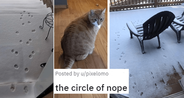 pictures of cats hating snow thumbnail includes pictures of a cat paw prints going in a circle on snow and another of a ginger cat 'the circle of nope u/pixelomo'