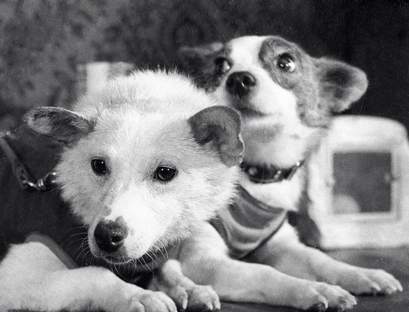 these are the dogs that helped make science what it is today