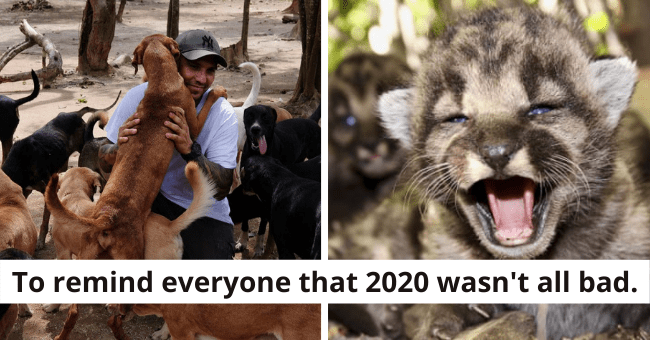 collection of the most positive animal news stories of 2020 thumbnail includes a smiling man surrounded by dogs and a roaring baby mountain lion | To remind everyone that 2020 wasn't all bad.