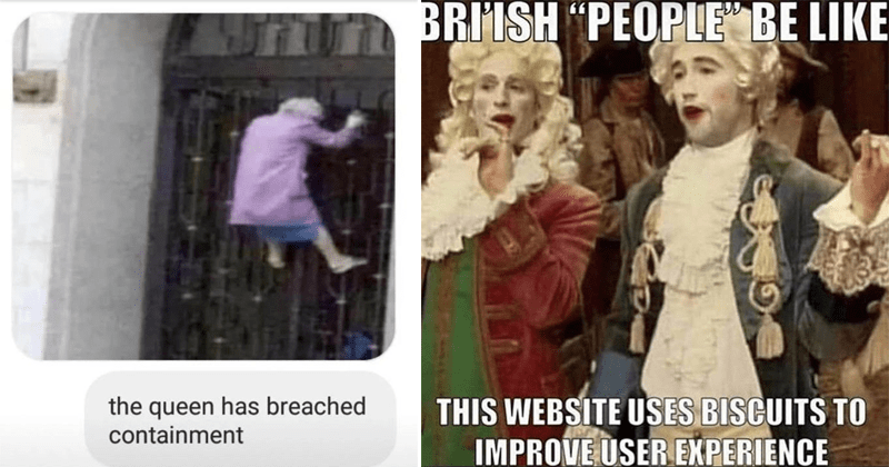 "Funny british memes, english memes, lol | queen has breached containment old woman in purple coat climbing a grate | BRIISH ""PEOPLE"" BE LIKE THIS WEBSITE USES BISCUITS IMPROVE USER EXPERIENCE"