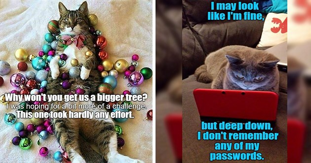 "original cat memes by i can has cheezburger users lolcats - thumbnail includes two cat memes one of a cat surrounded by ornaments ""why won't you get us a bigger tree""? i was hoping for a bit more of a challenge. This one look hardly any effort"" and a cat in front of a small screen ""i may look fine, but deep down i don't remember any of passwords"""