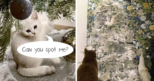 "tiny white kitten perfectly camouflaged in giant white christmas tree - thumbnail of giant white christmas tree and a kitten hidden within it ""can you spot me?"""