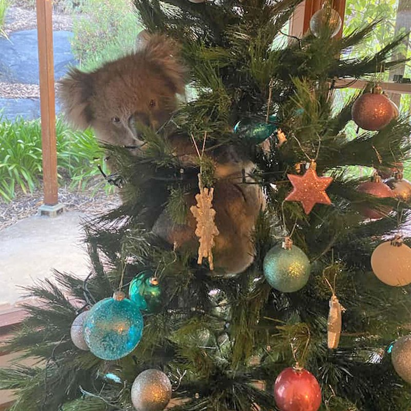 All the animals found in christmas trees this year