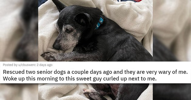 "all the newly adopted rescue animals of the week - thumbnail includes senior dog curled up in bed ""Rescued two senior dogs a couple days ago and they are very wary of me. Woke up this morning to this sweet guy curled up next to me."""