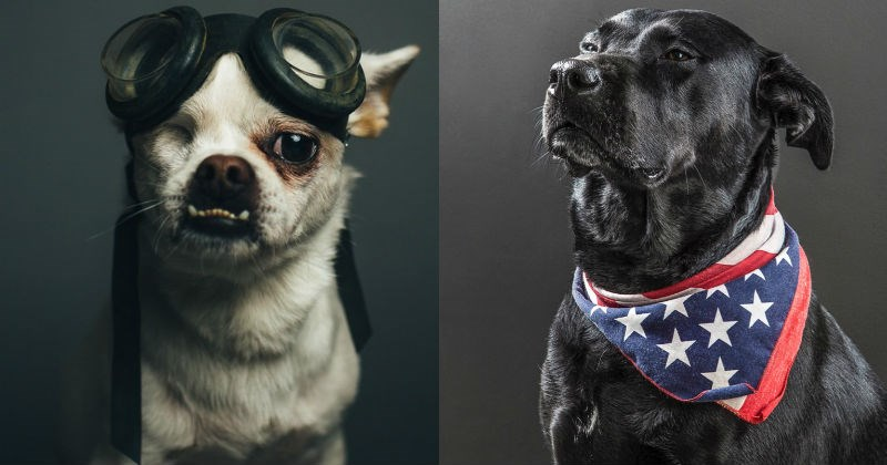 cool dog portraits
