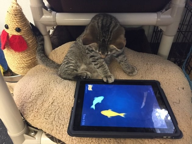 ipad,humane society,Cats,technology