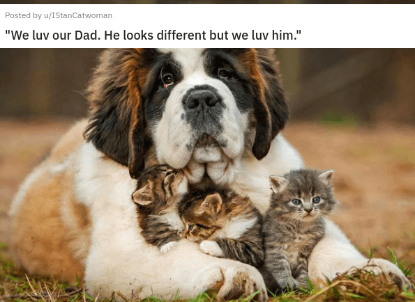 eye bleach nice things to look at cute baby animals cats and dogs adorable kittens and puppies small smol to cleanse your soul remedy cure | Posted by u/IStanCatwoman 4 days ago luv our Dad. He looks different but luv him. kittens cuddling with a large dog
