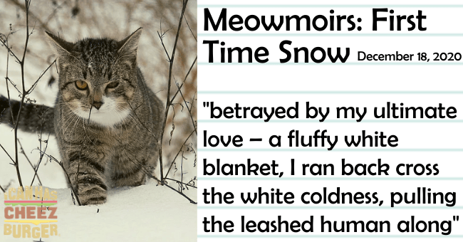 "The eleventh entry of Meowmoirs diary of a cat thumbnail includes a picture of a cat in snow the name of the entry and a quote from it 'Carnivore - Meowmoirs: First Time SnoW December 18, 2020 ""betrayed by my ultimate love - a fluffy white blanket, I ran back cross the white coldness, pulling the leashed human along"" CHEEZ BURGER'"