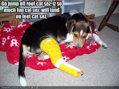cast feet injury lolcats mixed breed - 1322904320