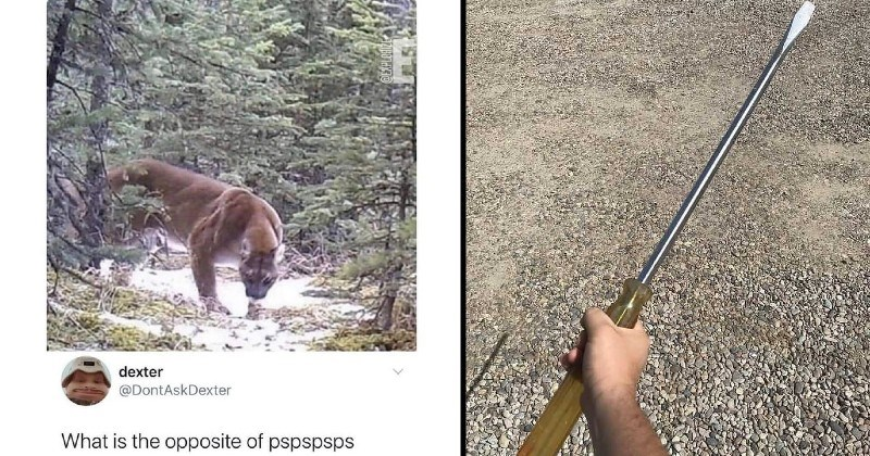 funny big versions of things | Imagine going hiking running into this. lon even know my next move would be dexter @DontAskDexter is opposite pspspsps @EXPLORIZE | huge screwdriver