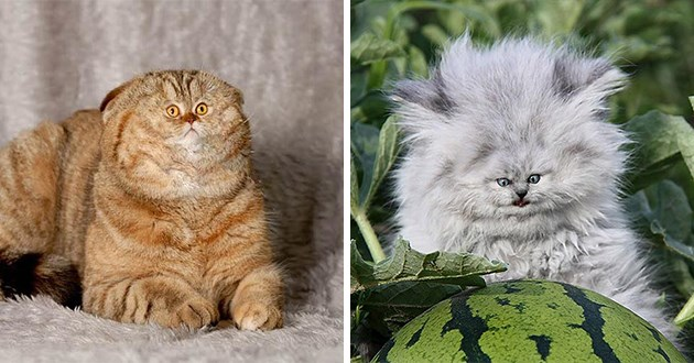 cats with photoshopped tiny faces - thumbnail of two cats with tiny face