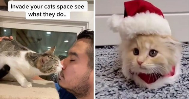 "most viral and adorable cat videos trending on instagram - thumbnail includes two images of cats, one of a cat sniffing the face of a man ""invade your cats space and see what they do"" and another tiny cat in tiny santa hat"