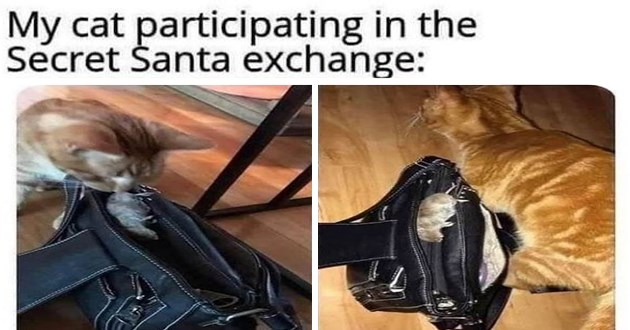 "list of funny and fresh animal memes - thumbnail includes cat putting mouse in purse ""my cat participating in the secret santa exchange:"""