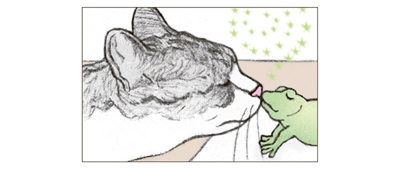 cat kisses a frog and instead of turning into a prince, the frog turns into a bowl of food - thumbnail of cat kissing frog