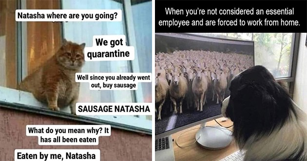 "the top 100 animal memes of the year 2020 - thumbnail of cat looking outside ""nastasha, where are you going?"" and a dog looking at a monitor screen of sheep ""when you're not considered an essential employee and are forced to work from home"""