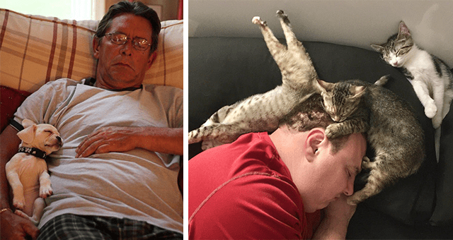 pictures of pets showing affection to their humans thumbnail includes two pictures including one of a puppy sleeping in the arms of a human and another of a human sleeping surrounded by three cats