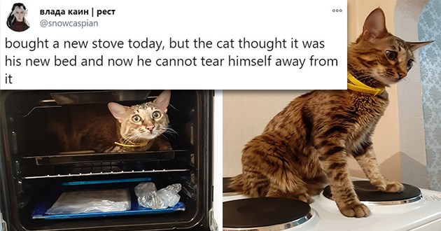 "weird things cats do - thumbnail of cat obsessed with oven ""bought a new stove today, but the cat thought it was his new bed and now he cannot tear himself away from it"""