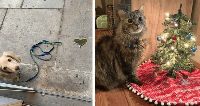 this week's collection of pictures that are worth more than 1000 words thumbnail includes two pictures including a cat sitting next to a mini Christmas tree and another of a dog sitting next to a pee puddle in the shape of a heart