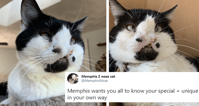 twitter account of a cat born with two noses thumbnail includes two pictures of a cat who has two noses as well as the tweet 'Whiskers - Memphis 2 nose cat @MemphisNose 000 Memphis wants you all to know your special + unique in your own way 10:42 PM · Aug 16, 2020 - Twitter for iPhone'
