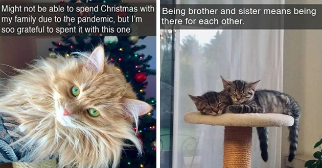 "fresh cat snapchats - thumbnail of two cat snap images - one of an orange cat in front of a christmas tree ""might not be able to spend christmas with my family due to the pandemic, but im so grateful to spent it with this one"" and two kittens hugging and sleeping ""being brother and sister means being there for each other"""