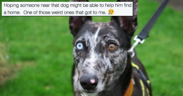 dogs twitter adoption david bowie Duncan Jones - 1326341
