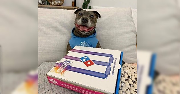 dog get a pizza box only to find out a salad is inside - thumbnail of excited pup with pizza box