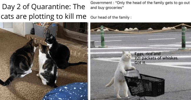 "a collection of the 50 best cat memes of 2020 thumbnail includes two pictures including a cat walking with a small cart 'Infrastructure - Government : ""Only the head of the family gets to go out and buy groceries"" Our head of the family : Eggs, rice and 721 packets of whiskas. Got it.' and another of three cats huddled together 'Small to medium-sized cats - Day 2 of Quarantine: The cats are plotting to kill me...'"