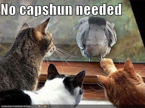 No capshun needed