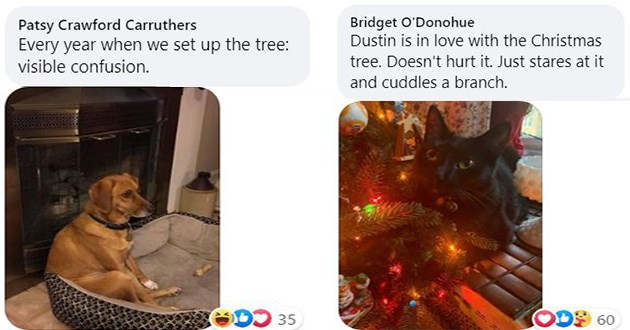 ichc share images of their pet's reaction to holiday decorations - thumbnail of two images one of a dog who is confusion and another of a good cat by the xmas tree | Every year set up tree: visible confusion | Dustin is love with Christmas tree. Doesn't hurt Just stares at and cuddles branch.