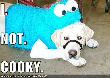 cookies costume labrador - 1327780608