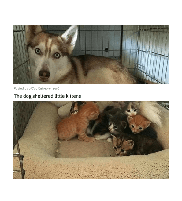 eye bleach nice things to look at cute baby animals cats and dogs adorable kittens and puppies small smol to cleanse your soul remedy cure | Posted by u/CoolEntrepreneuro 3 days ago 12 16 24 S 6 17 More dog sheltered little kittens