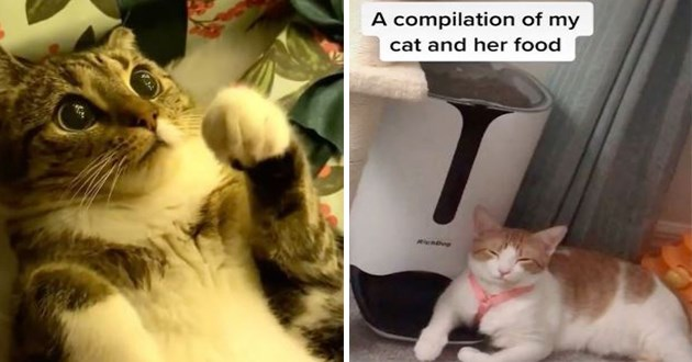 "most viral and adorable cat videos trending on instagram - thumbnail includes two images of cats, a cute kitten with big eyes looking at ornanment and a cat laying by her food ""a compilations of my cat and her food"""