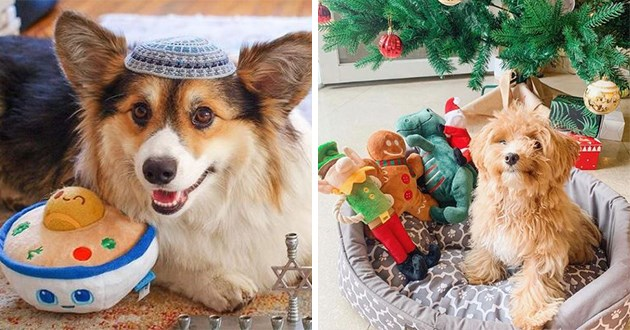 dogs posing with their holiday stuffed animal gifts | cute corgi dog wearing a yamaka kippah | poodle posing with toys under the Christmas tree