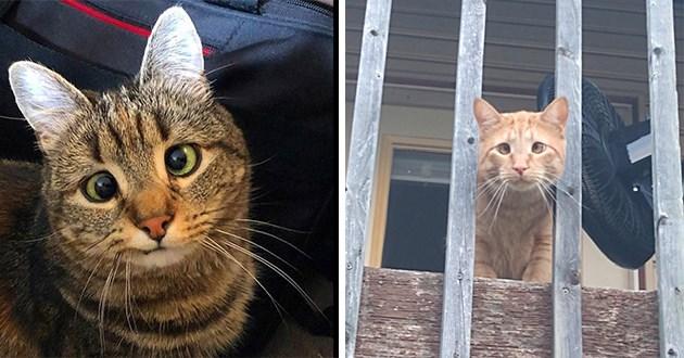 cats with cross eyed - thumbnail of cross-eyed kitties