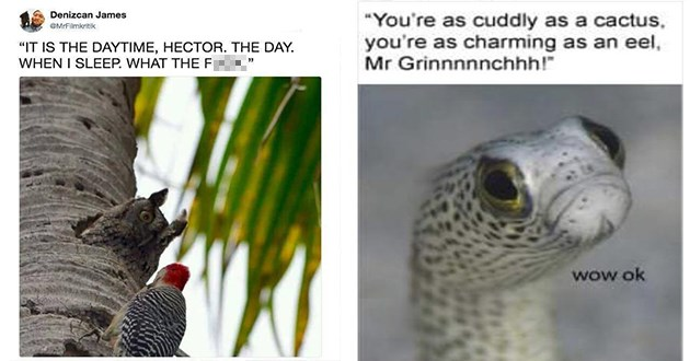 "adorable and hilarious animal pics and memes - thumbnail includes two memes - one of an owl looking out it's nest to stare down a bird ""it is the daytime, hector. the day. when i sleep. what the fuck"" and an eel ""you're as cuddly as a cactus, you're as charming as an eel, mr grinch!"" ""wow ok"""