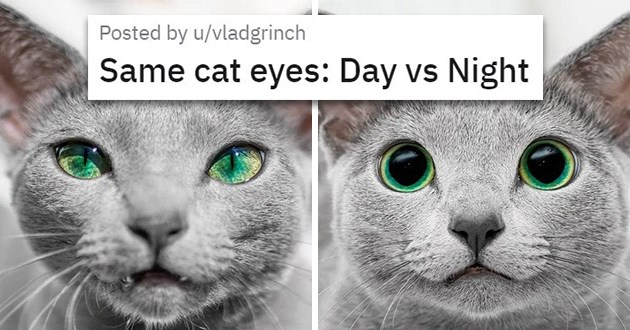 "pics and vids of the cutest animals of the week - thumbnail of cute cat with green eyes ""Same cat eyes: Day vs Night"""