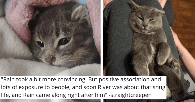 viral imgur thread about two feral kittens getting rescued and learning to trust humans thumbnail includes two pictures including one of a scared kitten and another of a kitten showing its belly 'Rain took a bit more convincing. But positive association and lots of exposure to people, and soon River was about that snug life, and Rain came along right after him -straightcreepen'
