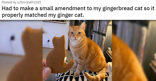 "cat medley filled with cuteness, laughs, rescues, before and after, mourning and loss - thumbnail of gingerbread cat cookie with missing ear ""Had to make a small amendment to my gingerbread cat so it properly matched my ginger cat."""