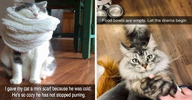"fresh cat snapchats - thumbnail of two cat snap images - one of a cat wrapped in a scarf ""I gave my cat a mini scarf because he was cold. He's so cozy he has not stopped purring."" and a cat reaching up to human ""Food bowls are empty. Let the drama begin"""