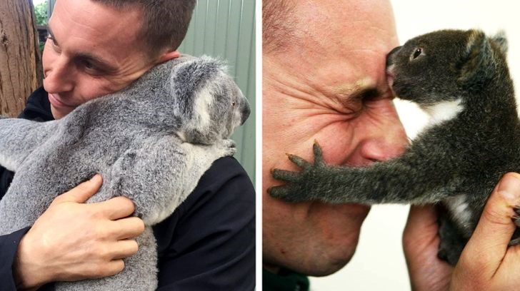 zookeeper from australia shares his love for animals - thumbnail of zookeeper hugging koala bear and koala kissing his forehead