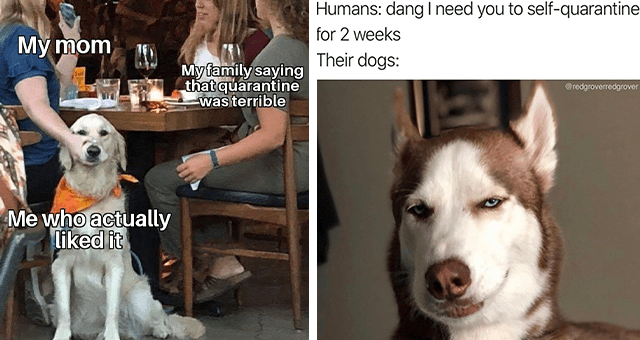 collection of the 50 best dog memes of 2020 thumbnail includes two memes including one of a dog smirking 'Dog - Humans: dang I need you to self-quarantine for 2 weeks Their dogs: @redgroverredgrover' and another of two people sitting at a table with one of them holding a dog's mouth shut 'Human - Mỹ mom My family saying that quarantine was terrible Me who actually liked it'