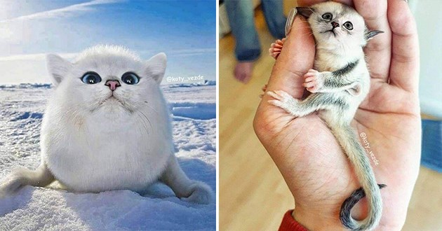 animals but their heads replaced with a cat's - thumbnail of cat face on a white seal and a cat face on a little sugar glider